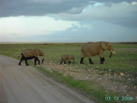 """Gestiefelte"" Elefanten - Amboseli Nationalpark"