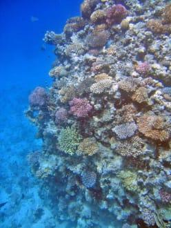 Hausriff - Tauchen Makadi Bay