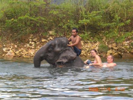 Bilder Mit Elefanten Schwimmen  Reisetipps