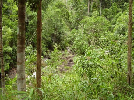 Im Dschungel - Pa La-U Wasserfall