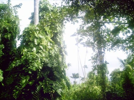 Royal Palm Reserve in Negril Jamaica - Royal Palm Reserve Negril