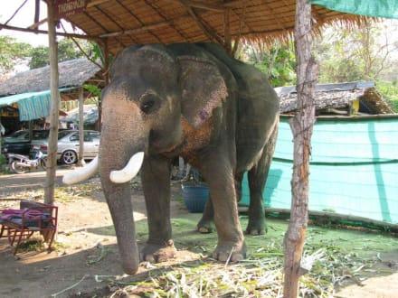 Elefanten Camp auf Koh Chang Thailand - Elefantenreiten Koh Chang