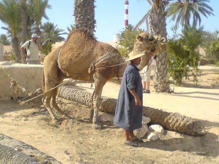 Alter Brunnen - Djerba Explore Parc