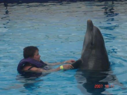 Schön - Delfinschwimmen Cancun