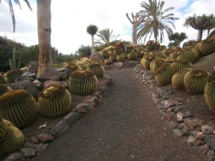 Botanischer Garten - Oasis Park