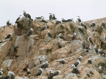 Ballestas Islands - Ballestas Inseln