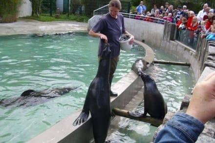 Robbenfütterung - Zoo Augsburg