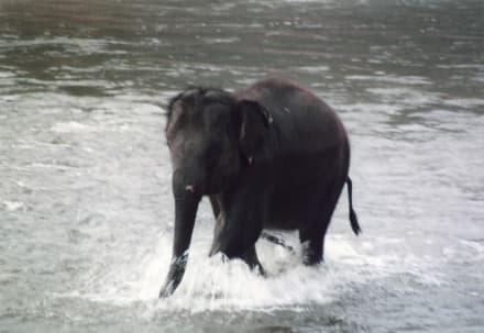 Babyelefant im Elefantencamp nördlich von Chiang Mai - Elefantenreiten Chiang Mai