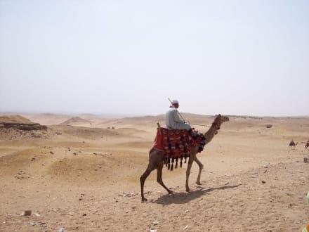 Wüstenschiff - Pyramiden von Gizeh