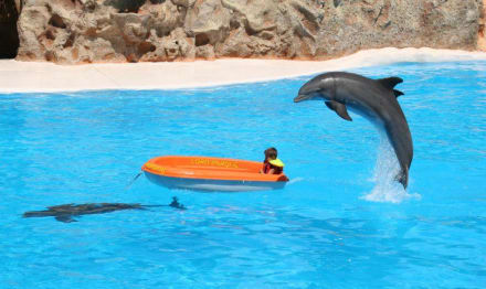 Delphin-Show im Loro Parque - Loro Parque