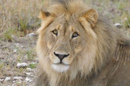 Fest im Blick! - Etosha Nationalpark