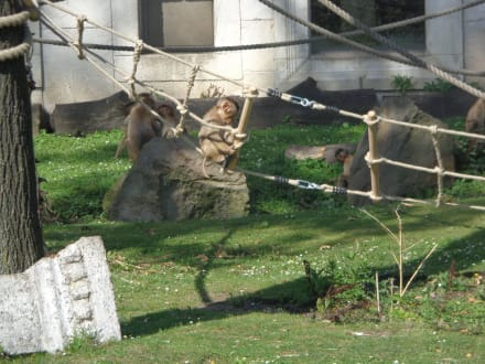 Affen Gehege - ZOOM Erlebniswelt Gelsenkirchen (Zoo)