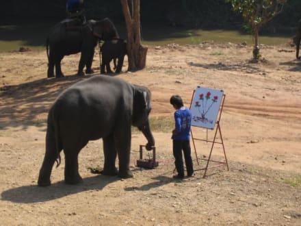Ein Elefant kann auch mahlen! - Maeping Elephant Camp