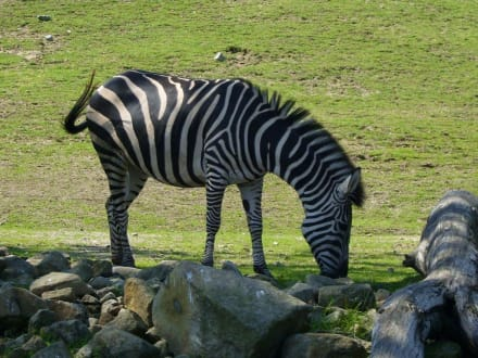 Zoom-Erlebniswelt - ZOOM Erlebniswelt Gelsenkirchen (Zoo)