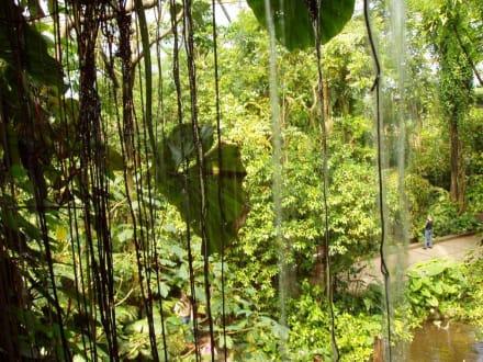 Dschungel - Burgers' Zoo