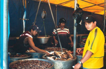 Fischhalle in Puerto Libertad - Markt in Puerto Libertad