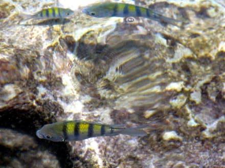 Bunte Fische - Xel-Ha Nationalpark