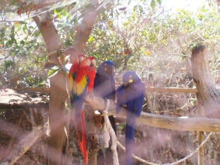Marineland Mallorca  Papagai - Marineland