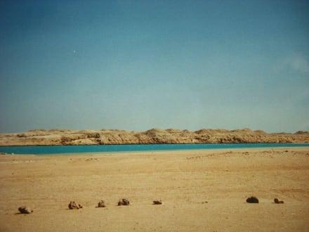Im Ras Mohammed Nationalpark - Schnorcheln Ras Mohammed