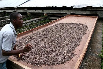 Kakaoplantage - Kakaoplantage