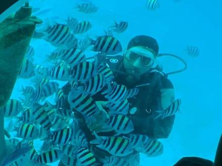 Einfach toll - AT-Touren Hurghada - Erlebe dein Ägypten!