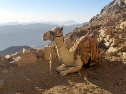 Ausflug Sinai - Mosesberg (Gebel Musa) / Berg Sinai