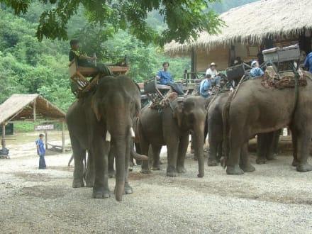 Elefantencamp bei Chiang Mai - Thailand - Elefantenreiten Chian Rai