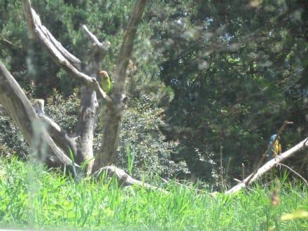 Bunte Vielfalt - Zoo Schmiding