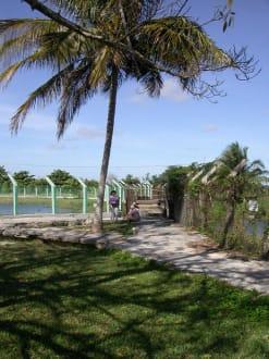 Guama - Krokodilfarm