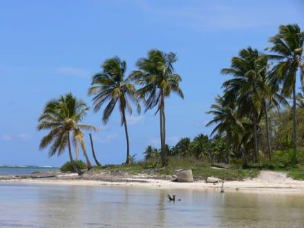 Dolphin Bay - Playa Bávaro