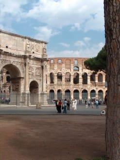 Tolle Bäume am Kolosseum - Kolosseum