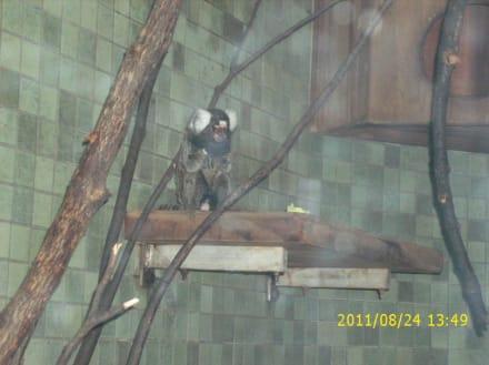 Besuch im Berliner Zoo - Zoologischer Garten Berlin