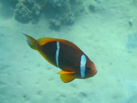 NEMO - Schnorcheln Makadi Bay