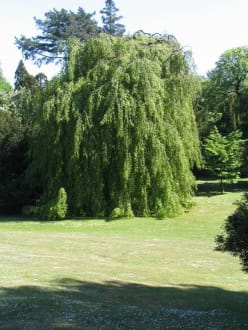 Schöne Bäume im Hügel-Park - Villa Hügel