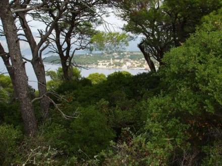 Eine schöne grüne Insel! - Lopud