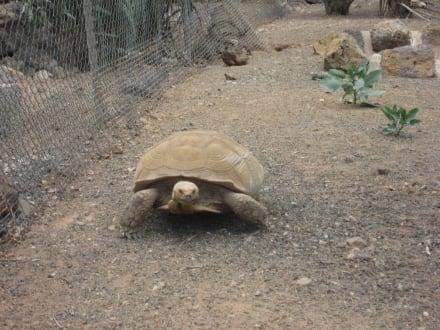 Schildkröte Tropical Park - Tropical Park