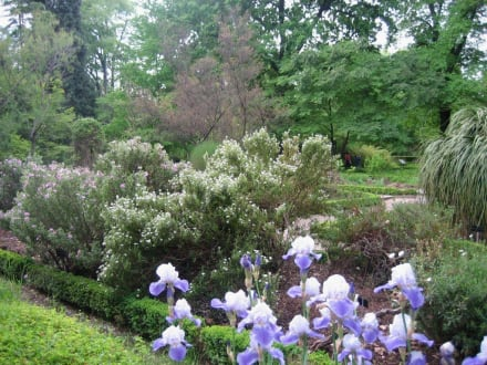 Botanischer Garten - reine Idylle - Königlicher Botanischer Garten Madrid