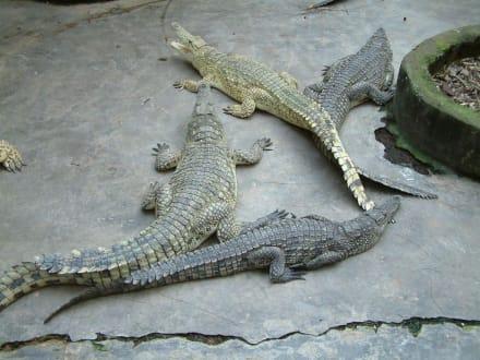 Ausflug Haller-Park in Mombasa - Haller Park