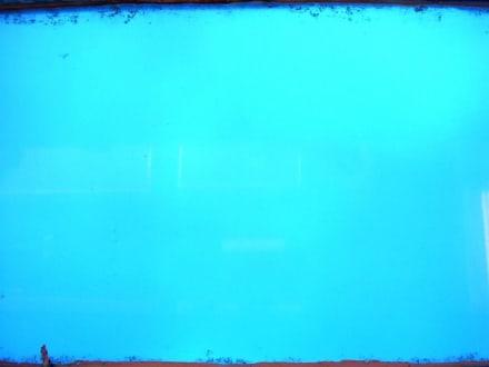Nicht viel zu sehen... - Glasbodenboot Tour San Miguel