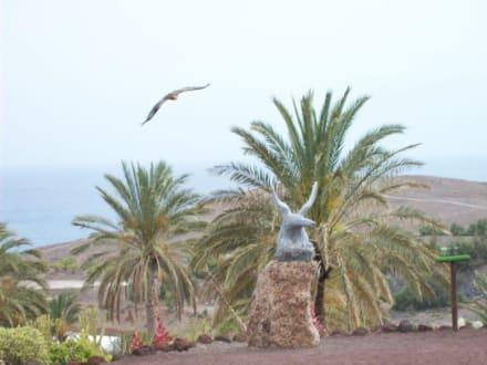 Greifvögel - Oasis Park