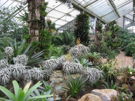 Princess of Wales Conservatory - Kew Gardens