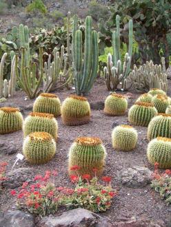 Jardin Botanico - Botanischer Garten Jardin Canario