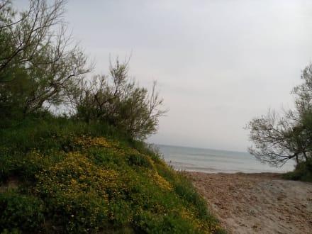 Strand Cala Bona in Cala Bona - Strand Cala Bona