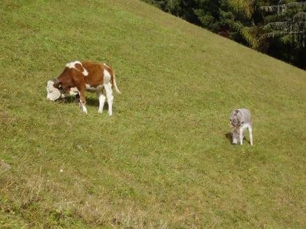 Ochs und Esel - Wandern St. Vigil in Enneberg