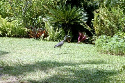 Shaw Park Garden - Shaw Park Garden