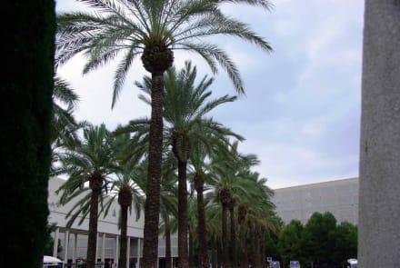 Schöne Palmen am Eingang - Flughafen Palma de Mallorca/Son Sant Joan (PMI)