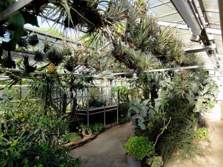 Gang Durch Die Gewächshäuser Bild Alter Botanischer Garten