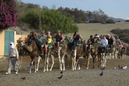 Karawane - Kamelreiten Maspalomas