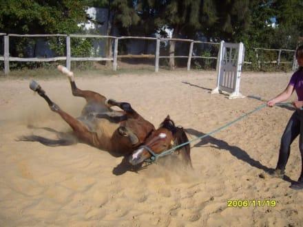 Erst ein Sandbad! - Reitstall des Hotel Le Sultan