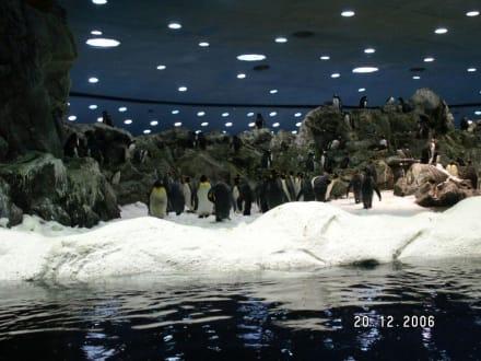 Sehr viele Pinguine - Loro Parque